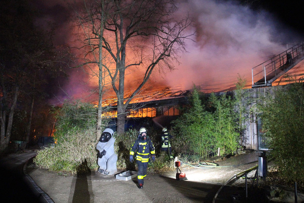 Allemagne: des singes tués dans l'incendie d'un zoo causé par des lanternes volantes