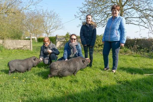 Vrijwilligers vangen ongewenste dieren op rond hoeve Vercaemer in Lendelede