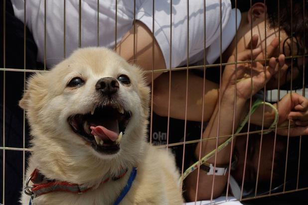 'Zuid-Koreaanse regering moet een einde maken aan consumptie van hondenvlees'