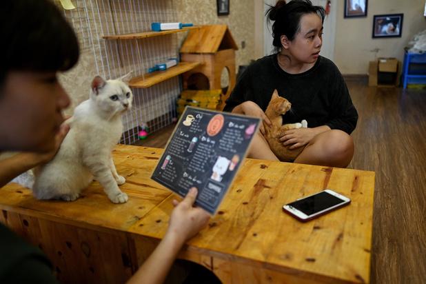 Au Vietnam, un café recueille des chats à adopter