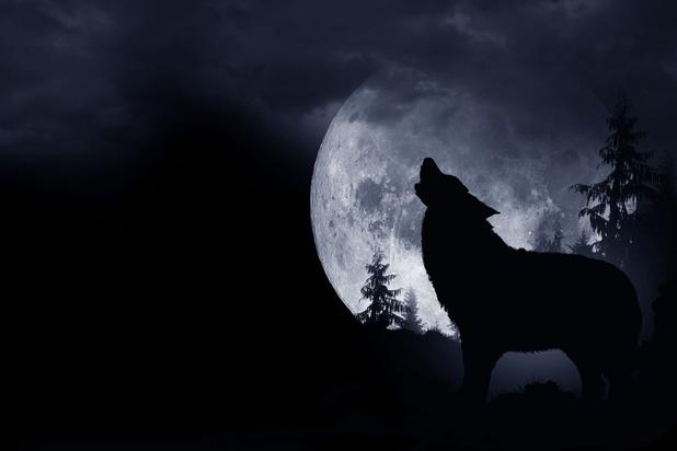 Van bloedverlies tot creatieve piek: wat is de invloed van de maan op de mens?