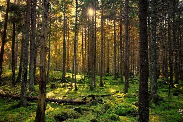Comment les forêts protègent les animaux du réchauffement climatique