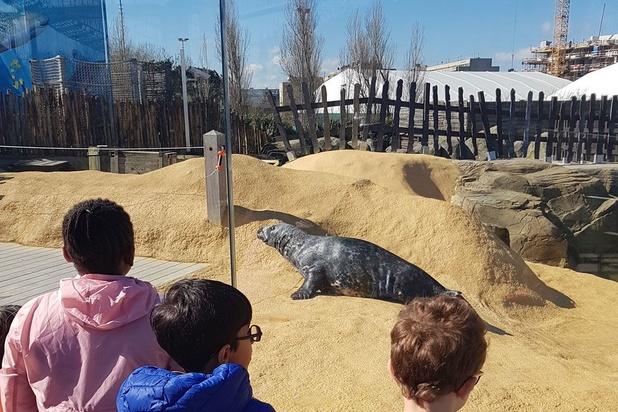 L'espace pour les phoques et lions de mer rénové au Sea Life Blankenberge