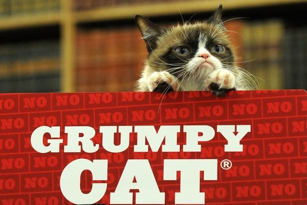 Mort de Grumpy Cat, chat chouchou des réseaux sociaux et d'internet