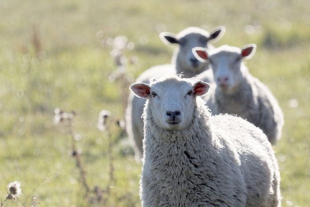 Nieuwe 'cloud snooper' aanval is 'wolf in schapenvacht' voor AWS