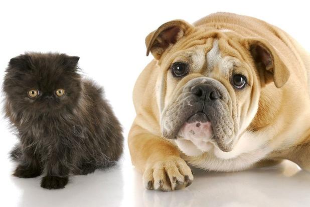 Comment échapper à l'elevage industriel pour nourrir les chiens et chats