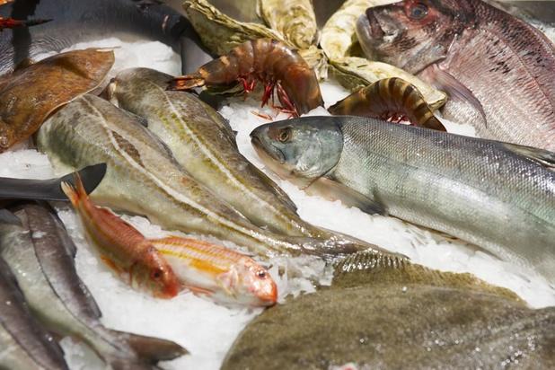 Manger du poisson malgré la pollution : les espèces recommandées