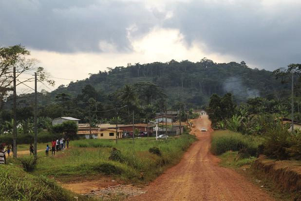La Norvège va payer le Gabon pour ne pas déforester