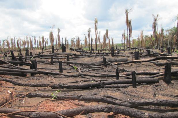 WWF: 'Veel meer ontbossing tijdens coronacrisis'