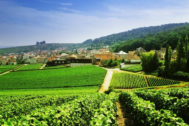 Comment le champagne se prépare-t-il au réchauffement climatique?