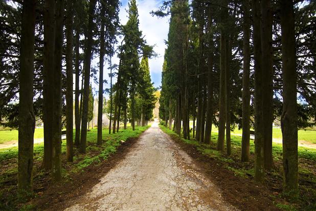 Grèce: L'ancien domaine royal de Tatoï devrait ouvrir ses portes au public