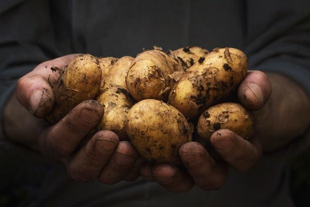 Le prix de la pomme de terre au plus haut depuis des années