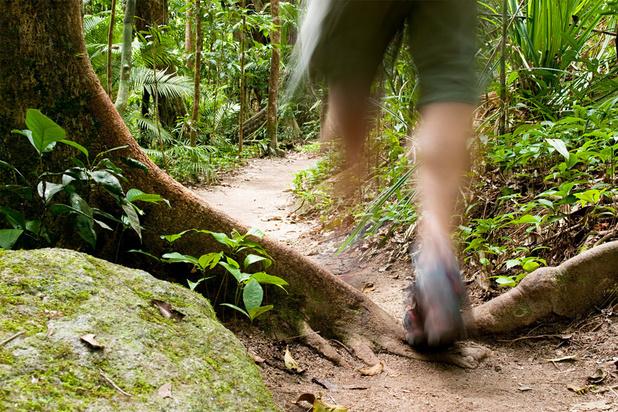 De natuur in: drie boekhandelaars tippen elk een wandelboek