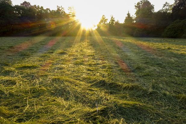 Mysterie van de dag: waarom ruikt vers gemaaid gras zo lekker?