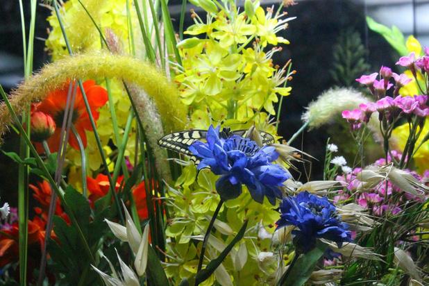 'Tips voor een klimaatvriendelijke tuin, die uw leven aangenamer, luier én goedkoper maakt'