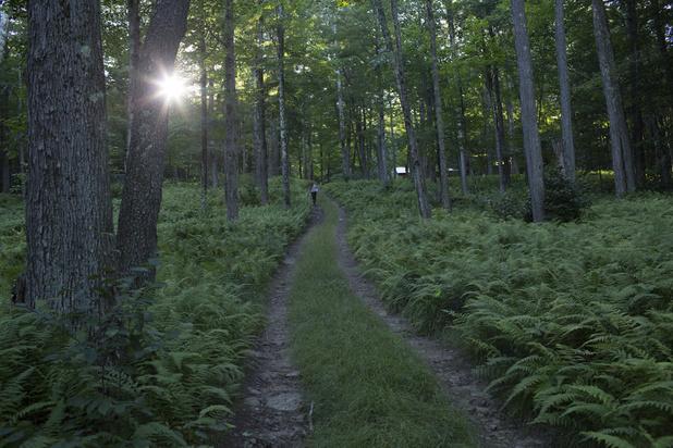 La plus vieille forêt du monde aurait été découverte