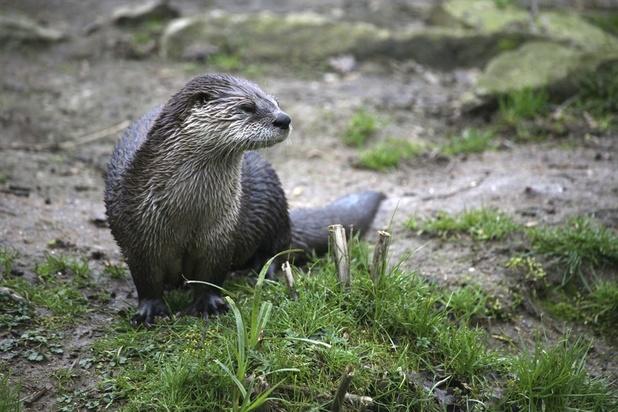 L'état de conservation des espèces et habitats en Wallonie reste défavorable