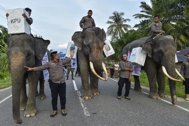 Indonésie : début d'élections titanesques