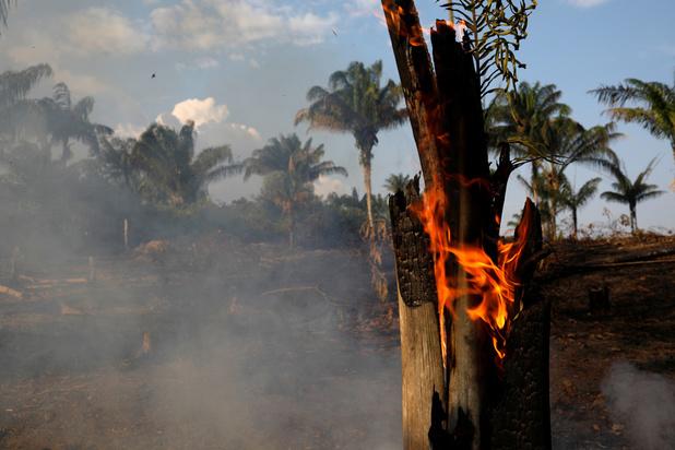 'Het brandend Amazonewoud kan het begin van een doemscenario zijn'