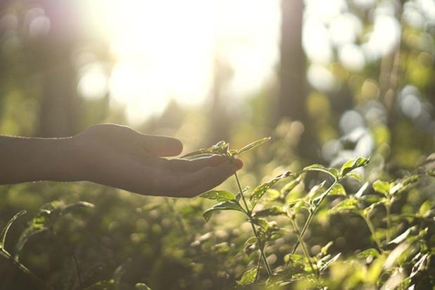 """""""La nature profonde de l'écologisme"""""""