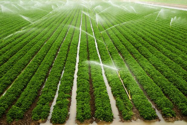 'Over het waterverbruik van de landbouw weten we zo goed als niets'