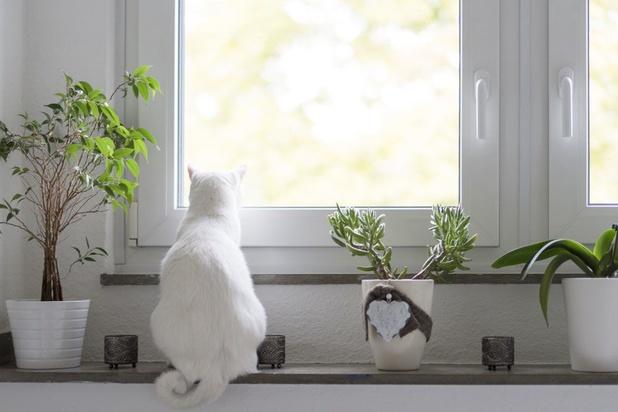 Wees allergieën te snel af: zo verbeter je de luchtkwaliteit binnenshuis