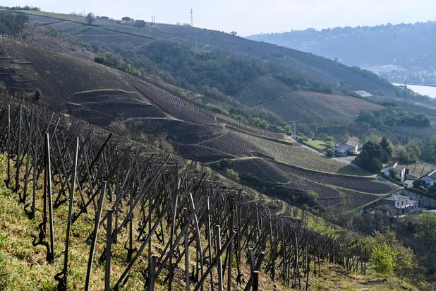 Vignobles français: sauver ce qui peut l'être