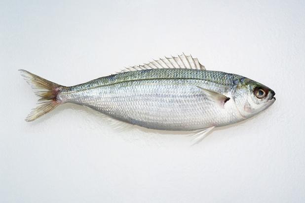 Le poisson poison: quand mange-t-on trop de poisson ?