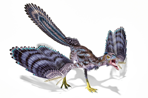 Les dinosaures à plumes aussi avaient des poux