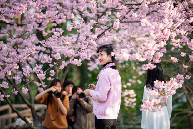 Tokyo privé de pique-niques sous les cerisiers en fleurs