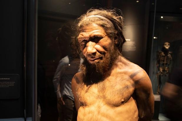 Sporen van kannibalisme gevonden bij de neanderthalers