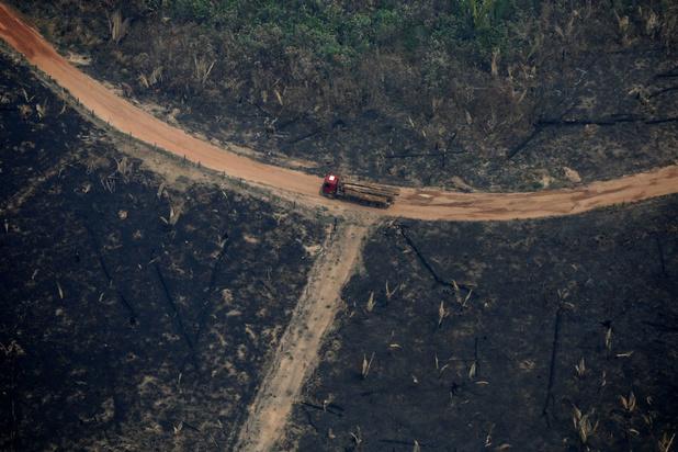 'Hoe Europa met handel het Amazonewoud kan redden'