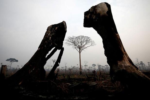 'Wordt in het Amazonewoud een straffeloze moord gepleegd op moeder natuur?'