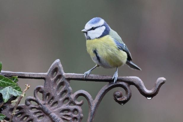 Comment aider Natagora à recenser les oiseaux ces 1er et 2 février
