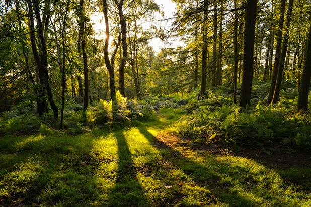 Bossen met verschillende boomsoorten slaan meer CO2 op