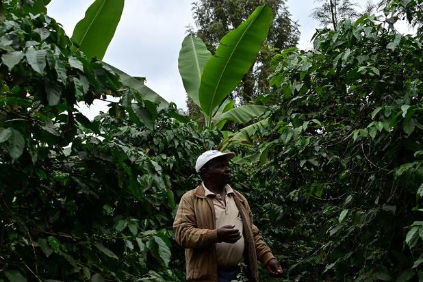 L'arme secrète de ce cultivateur kényan ? Des excréments