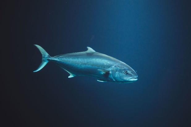 Hogere temperaturen zorgen nu al voor daling visbestand