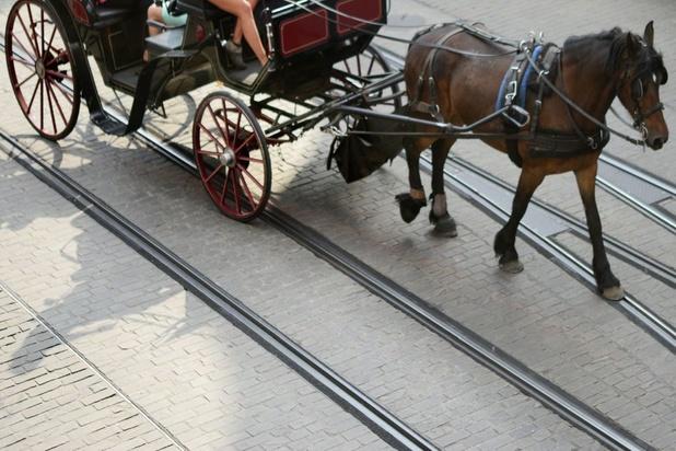 Gent stopt met toeristische paardenkoetsen omwille van dierenwelzijn