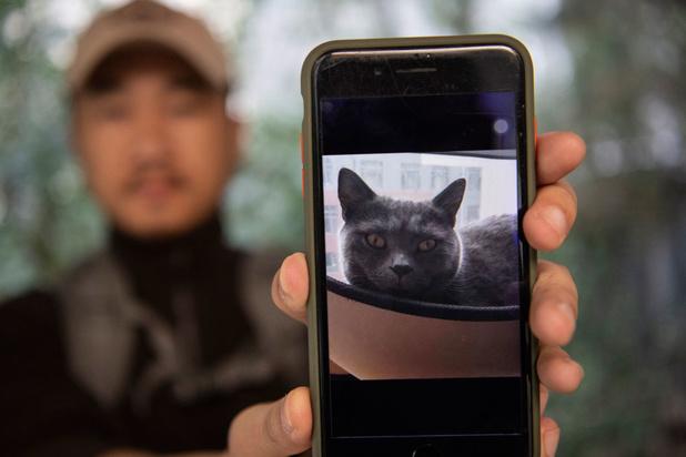 Des détectives high-tech pour chats perdus