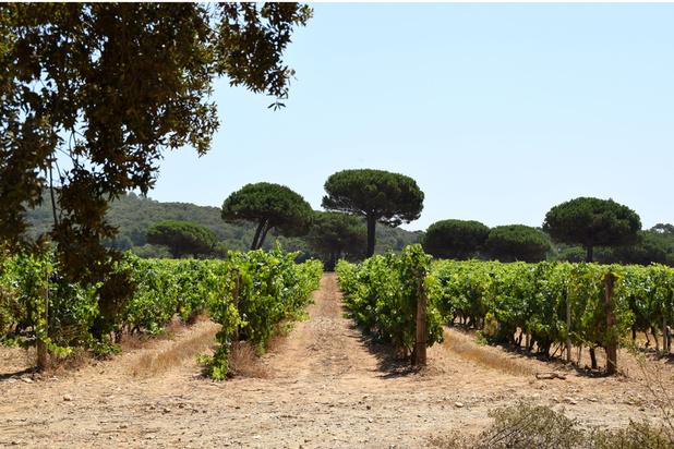 Chanel produira bientôt du vin rosé