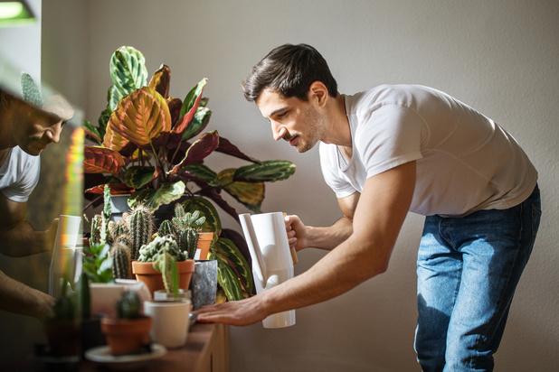 Jungle urbaine: mode d'emploi pour des plantes épanouies