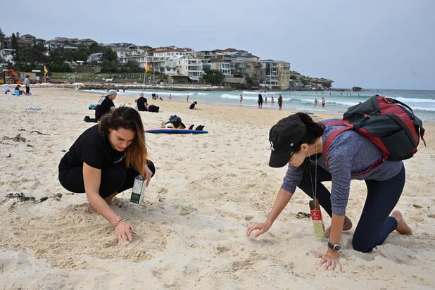 Pour la journée du nettoyage de la planète, les bénévoles se mobilisent