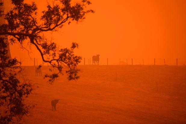 Incendies: après une journée catastrophique, l'Australie évalue les dégâts
