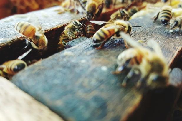 Beieren redt de bijen: petitie wordt wet