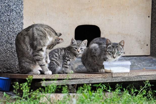 A Marseille, la difficile gestion des chats errants