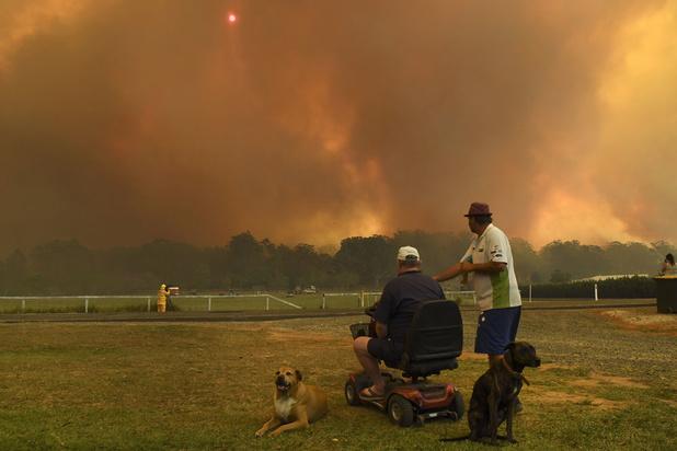 Infografiek: angstaanjagende cijfers over de Australische bosbranden