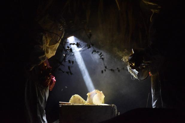 Le miel, nouvel or de la Côte d'Ivoire
