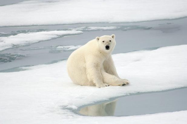 Google: 'Fini la publicité en cas de fausses infos climatiques'