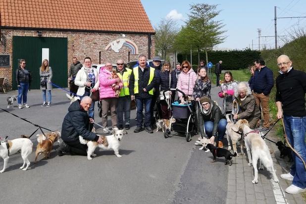 Benefiet voor Roemeense straathonden in Brugge