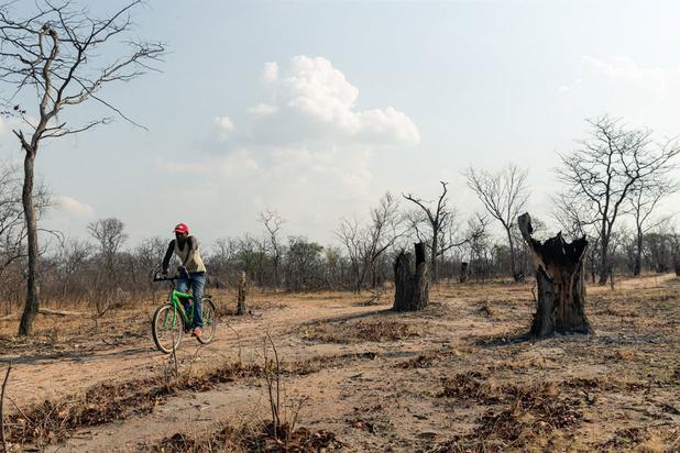 """Le Zimbabwe sur le point de subir une famine """"créée par l'homme"""""""